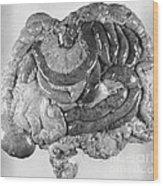 Digestive Organs Wood Print