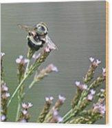 Digger Bee Wood Print