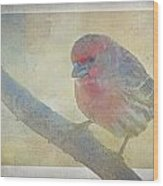 Digitally Painted Finch With Texture II Wood Print