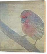 Digitally Painted Finch With Texture IIi Wood Print