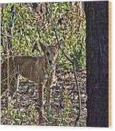 Dingo In The Wild V3 Wood Print