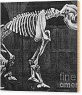 Diprotodon, Cenozoic Mammal Wood Print