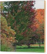 Distant Fall Color Wood Print