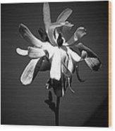 Diva's Swan Song Wood Print