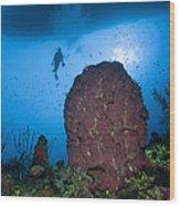 Diver And Barrel Sponge, Belize Wood Print