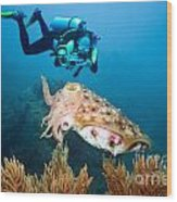 Diver And Cuttlefish Wood Print