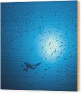 Diver And School Of Fish In Blue Water Wood Print