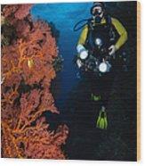 Diver And Sea Fans, Fiji Wood Print