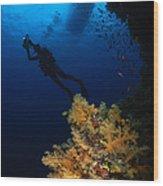 Diver And Soft Coral, Fiji Wood Print