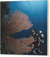 Diver By Sea Fans, Indonesia Wood Print