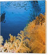 Diver Hovering Over Soft Coral Reef Wood Print