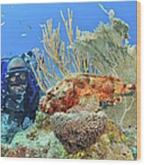 Diver Looks At Scorpionfish Wood Print