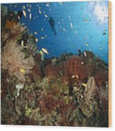 Diver Over Reef Seascape, Indonesia Wood Print