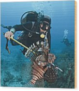 Diver Spears An Invasive Indo-pacific Wood Print