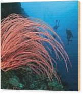 Divers And Whip Coral Wood Print