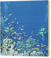 Divers Enjoy The Beauty Of The Reefs Wood Print