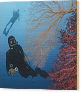 Divers Swimming By Sea Fans, Indonesia Wood Print