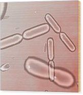 Dividing Bacteria, Computer Artwork Wood Print