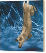 Diving Dog 2 Wood Print
