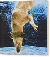 Diving Dog 3 Wood Print