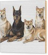 Doberman Pinscher And Friends Wood Print