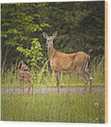 Doe And Fawn Along A Roadside Near Iron Mountain Michigan. Wood Print