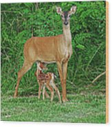 Doe And Nursing Fawn Wood Print