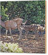 Doe And Twin Fawns Wood Print