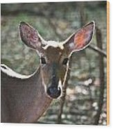 Doe Profile 9734 Wood Print