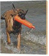 Dog 119 Wood Print