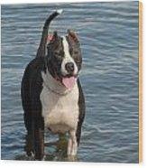 Dog 124 Wood Print