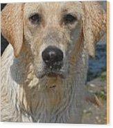 Dog 77 Wood Print by Joyce StJames