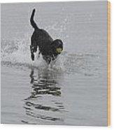 Dog 82 Wood Print