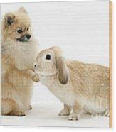 Dog And Rabbit Wood Print