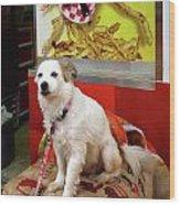 Dog At Carnival Wood Print