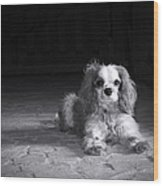 Dog Black And White Wood Print by Jane Rix