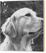 Dog Black And White Portrait Wood Print