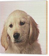 Dog, Close-up Wood Print