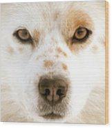 Dog Eyes Wood Print