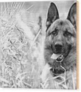Dog In Field Wood Print
