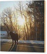 Dog In Morning Sun Wood Print