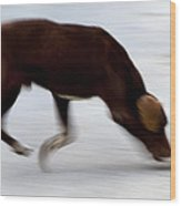 Dog In Motion Wood Print