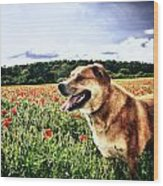Dog In The Poppy Field Wood Print