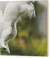Dog Jumps Wood Print