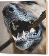 Dog Nose And Teeth Wood Print