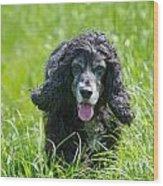 Dog On The Grass Wood Print