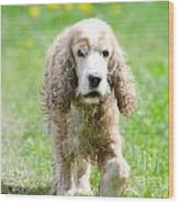 Dog On The Green Field Wood Print