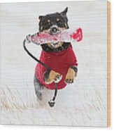 Dog Playing In Snow Wood Print by Paws on the Run Photography