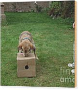 Dog Playing Wood Print by Mark Taylor