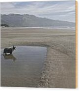 Dog Playing On Sandy Beach In Water Wood Print by Keenpress